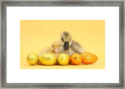 Easter Duckling And Gosling Framed Print