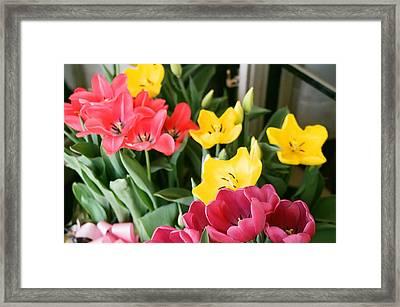 Easter Morning Framed Print by Sarah Reed