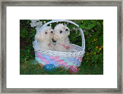 Easter Pups Framed Print by Lynn Bauer