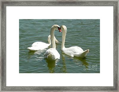 Easter Swans Framed Print by Alisa Tek