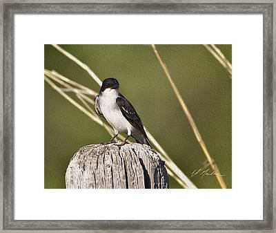 Eastern Kingbird Framed Print