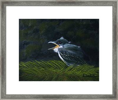 Eastern Kingbird Fledgling Framed Print