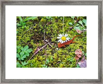 Eastern Newt Juvenile 3 Framed Print