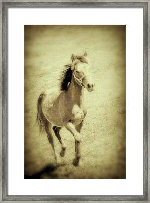 Easy Spirit Framed Print by Karol Livote