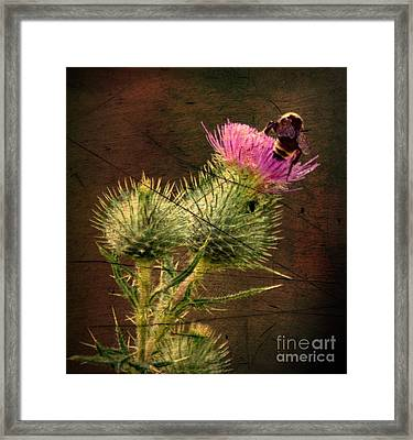 Easy Stepping Framed Print by David Taylor