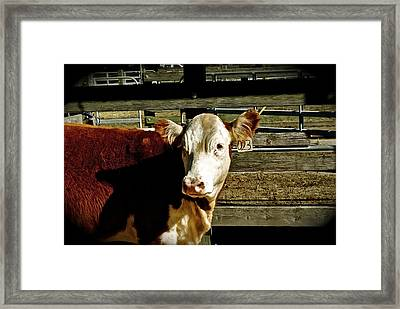 Eat Me Framed Print by Thomas Brown