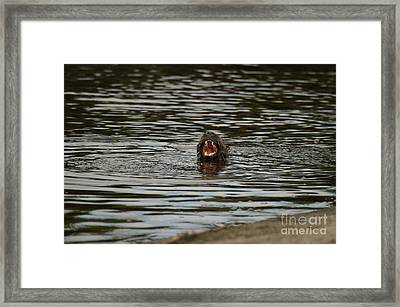 Eat More Fish Framed Print by Jack Norton