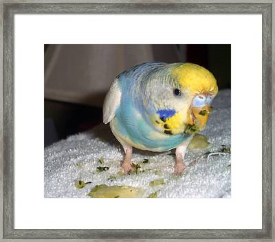 Eat Your Cucumber Framed Print by Kimberly Mackowski