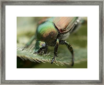 Eating Machine Framed Print by Dean Bennett