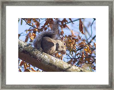 Framed Print featuring the photograph Eating Squirrel by Michael Waters