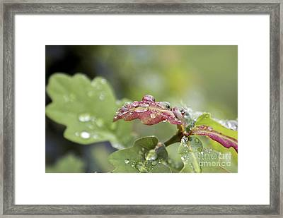 Eau De Vie - S01r03 Framed Print by Variance Collections
