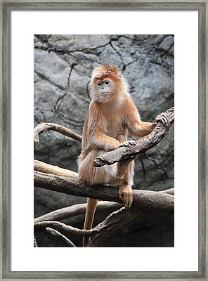 Ebony Langur Framed Print by Mike Martin