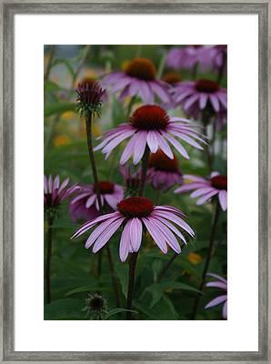 Echinatia Framed Print by Margaret Steinmeyer