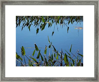 Framed Print featuring the photograph Echo by Robin Regan