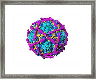 Echovirus Type 12 Particle Framed Print by Laguna Design