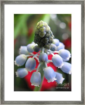 Ecstatic Photography Framed Print