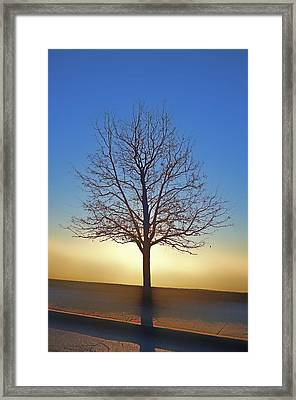Eden Tree Framed Print