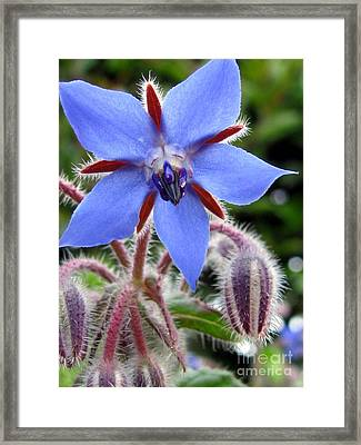 Edible Flower Photography Framed Print