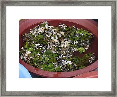 Edible Lichen Framed Print by Bjorn Svensson