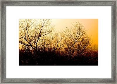 Eerie Dawn Framed Print