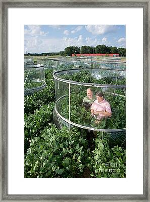 Effects Of Co2 On Soy Framed Print by Science Source