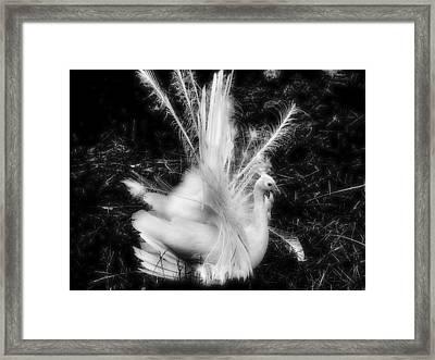Effervescence II  Framed Print