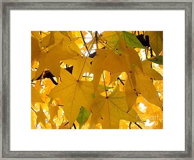 Efx.13 Framed Print