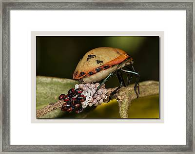 Framed Print featuring the digital art Eggs Hatched 02 by Kevin Chippindall
