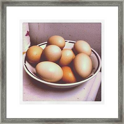 Eggs Framed Print by Micah Mulinix