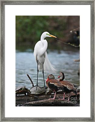 Framed Print featuring the photograph Egret - Best Friends by Luana K Perez