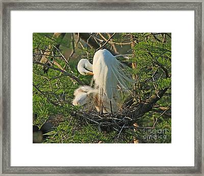 Framed Print featuring the photograph Egret - Mother And Baby Egrets by Luana K Perez