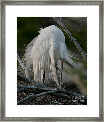 Framed Print featuring the photograph Egret - Mother And Eggs  by Luana K Perez