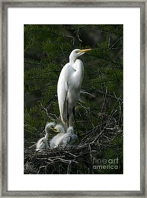 Framed Print featuring the photograph Egret - Proud Mother by Luana K Perez