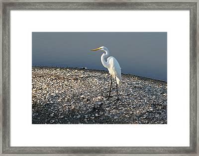 Egret At Huntington Framed Print