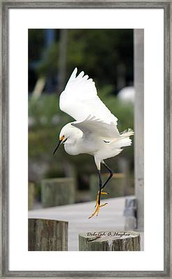 Egret Ballet Framed Print