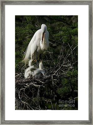 Framed Print featuring the photograph Egret Bird - Mother Egret And Babies by Luana K Perez