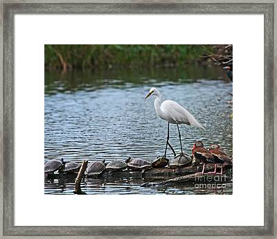 Egret Bird - Supporting Friends Framed Print