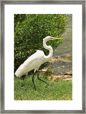 Framed Print featuring the photograph Egret By The Bay by Rick Frost