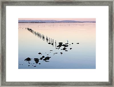 Egret (egretta Sp) Searching For Food In Last Light On Etang De Thau, Languedoc-roussillon, France  Stakes In The Water Hold Nets For The Oyster And Mussel Fisheries Framed Print