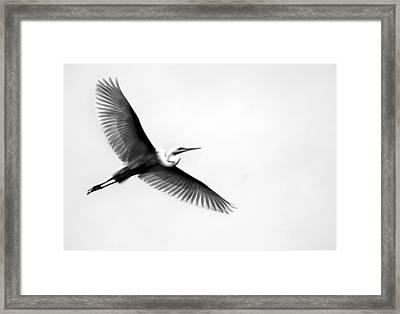 Egret Elegance Framed Print by Skip Willits