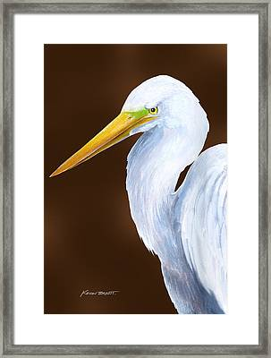 Egret Head Study Framed Print by Kevin Brant