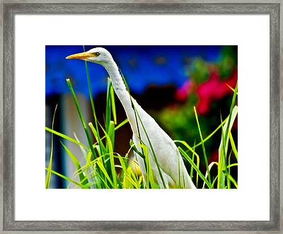 Egret In Grass Framed Print