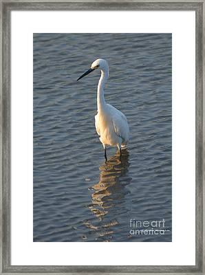 Egret In Marsh Framed Print by Gordon Mooneyhan