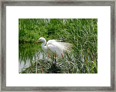 Framed Print featuring the photograph Egret by Kathy Gibbons
