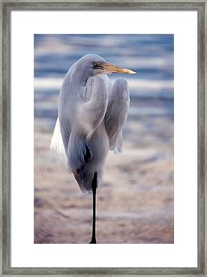 Egret Key West Framed Print
