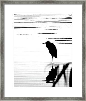 Framed Print featuring the photograph Egret  by Lizi Beard-Ward