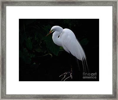 Framed Print featuring the photograph Egret On A Branch by Art Whitton