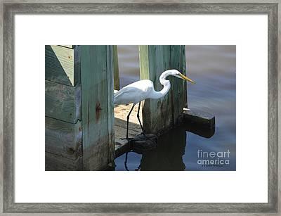 Egret On Rice Trunk Framed Print