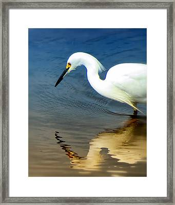 Egret Reflected Framed Print by Diane Wood