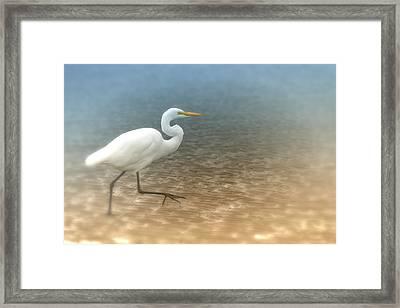 Egret Stroll Framed Print by Karol Livote